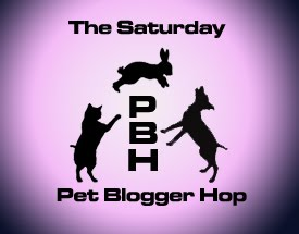 Pet+blogger+hop+pink+copy