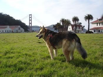 GrouchyPuppy-San-Francisco