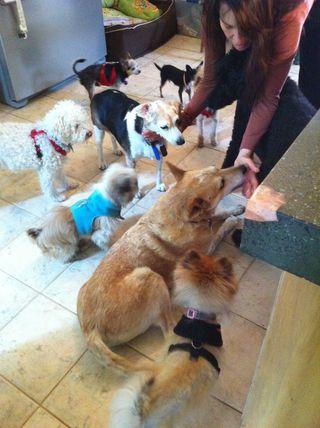 Sherri dispensing doggie meds