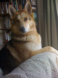 Smart Dog Cleo