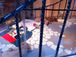 SF/SPCA Holiday Pet Adoption Window at Macy's