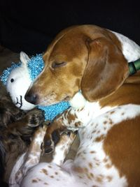 Pickle & His Sheep