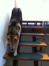 Cleo Navigates Stairs