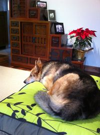 Cleo_PLAY_Pet_Bed
