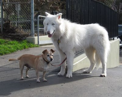 Funny Dogs - Ying & Yang