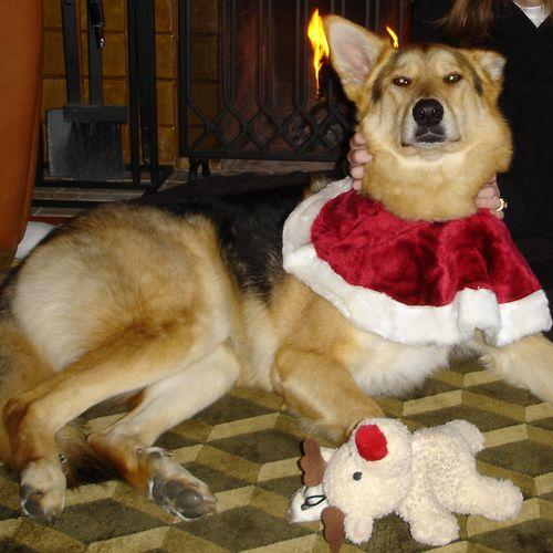 Cleo Dog Ballerina