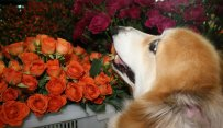 MSPCA Mother's Day Fundraiser
