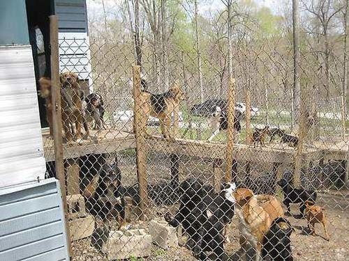 monroe-county-humane-dogs