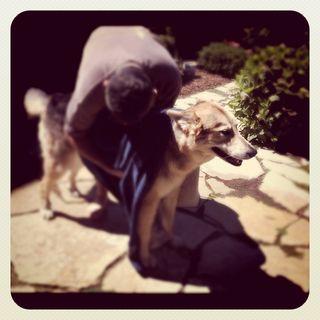 Dog-Bath-Cleo