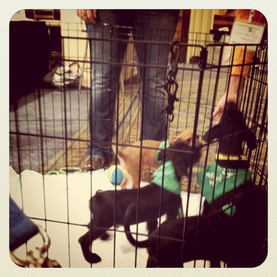 Lucky_Dog_Rescue_Black_Dogs