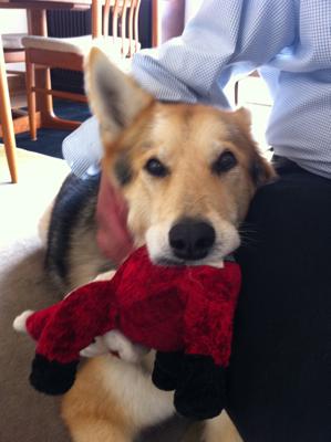 Cleo-Santa-Dog-Toy
