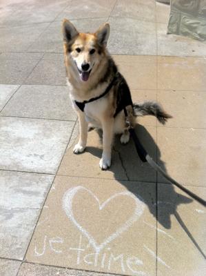 Neighborhood_dog-lover