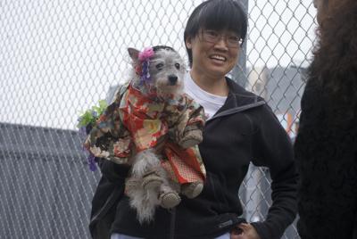 Michi-Senior-Dog-Handmade-Costume