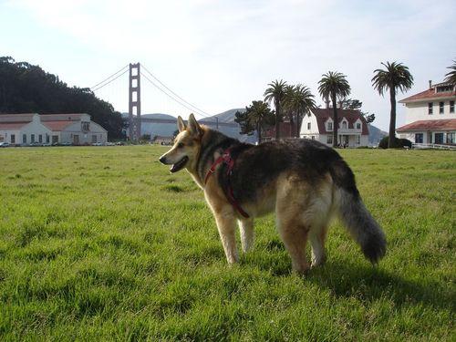 crissy-field-golden-gate-bridge