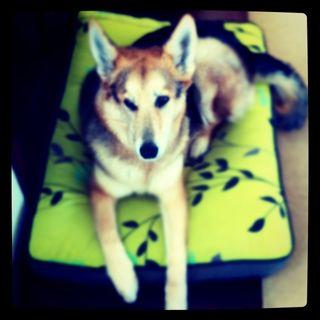 Cleo-Dog-Adoption-Investing-Tips