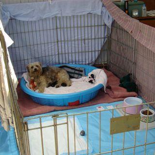 Petunia pups in their pen