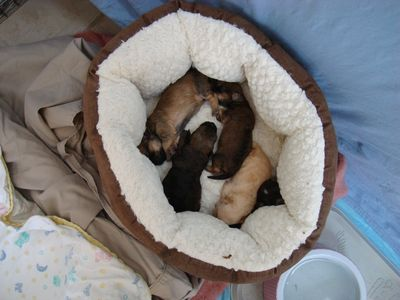 Bed full of pups