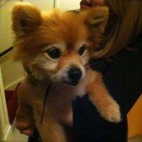 Bongo-Muttville-Senior-Dog