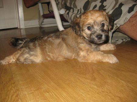 Puppy-Legs-HWAC