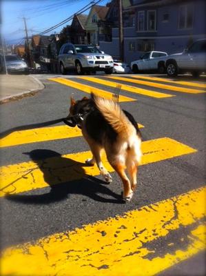 street-walker-dog