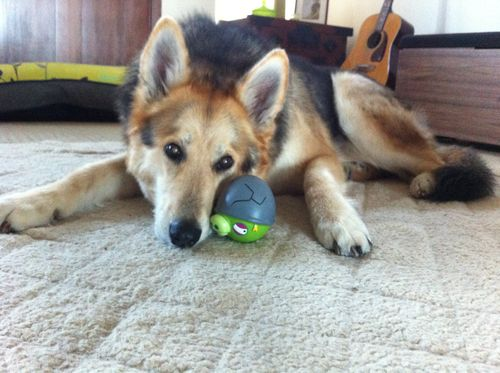 Cleo-Dog-Toys