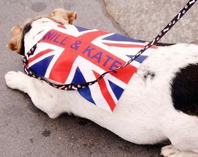 Bulldog Photo by Craig Thomas Vanity Fair Magazine
