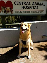 Cleo-Specialist-Visit-Petaluma