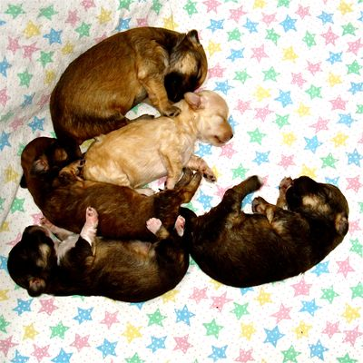 Pups_star blanket