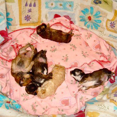 puppies-photo-hwac