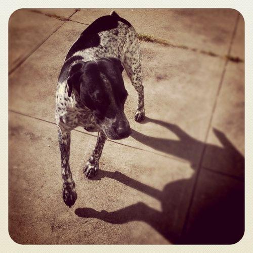 Funston-Grouchy-Puppy-Buddy