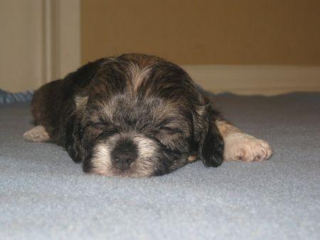Petunia-Puppy-Posse-HWAC