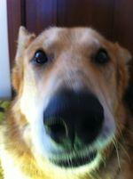 Cleo_Grouchy_Puppy