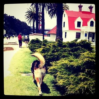 Walking-SF-Presidio
