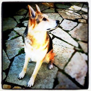 Cleo-Grouchy-Puppy-2011-News