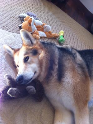 Senior Dog Toys