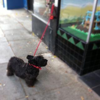 Small-black-dog