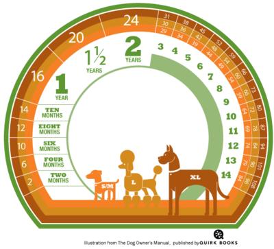 Dog_age_chart