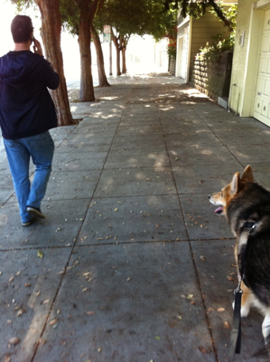 Walk-Your-Dog-Hill