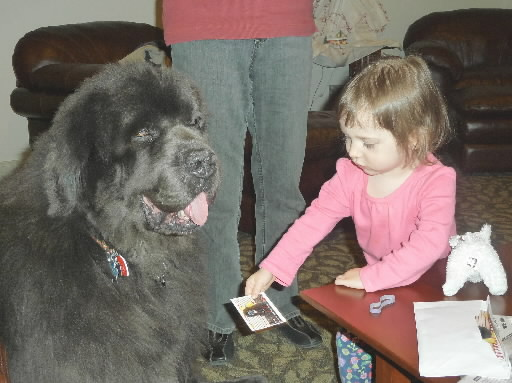 Seattle Children S Therapy Dog Sheep Dog