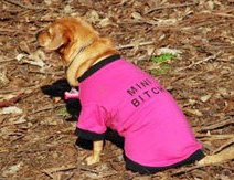 Pooch-Park-Wear-Dog-Clothing